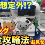 【クレーンゲーム】#409 店員想定外!? Cリング完全攻略法お見せします!! ぬいぐるみ乱獲!! UFOキャッチャー