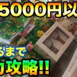 【クレーンゲーム】#410 投資5000円以上!! 鬼畜台を自力攻略!! スウィートランドで散財 UFOキャッチャー