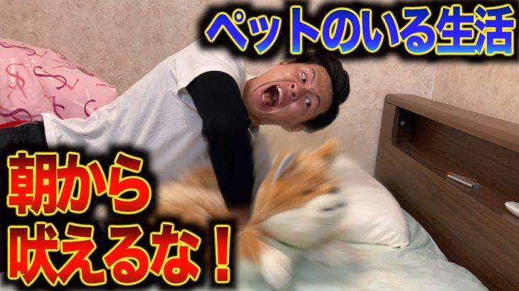 【犬の鳴き声がうるさい】ゲーム実況者のモーニングルーティン