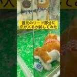 【クレーンゲーム】豆柴3兄弟のぬいぐるみを取る方法 How to take a stuffed animal of 3 Mameshiba Inu brothers