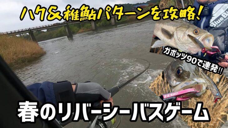 【シーバス】ガボッツ90で攻略!春のリバーシーバスゲーム  ハク&稚鮎パターン